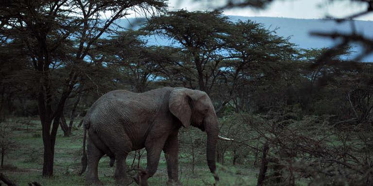 Dans la réserve nationale kényane du Masai Mara en 2011.