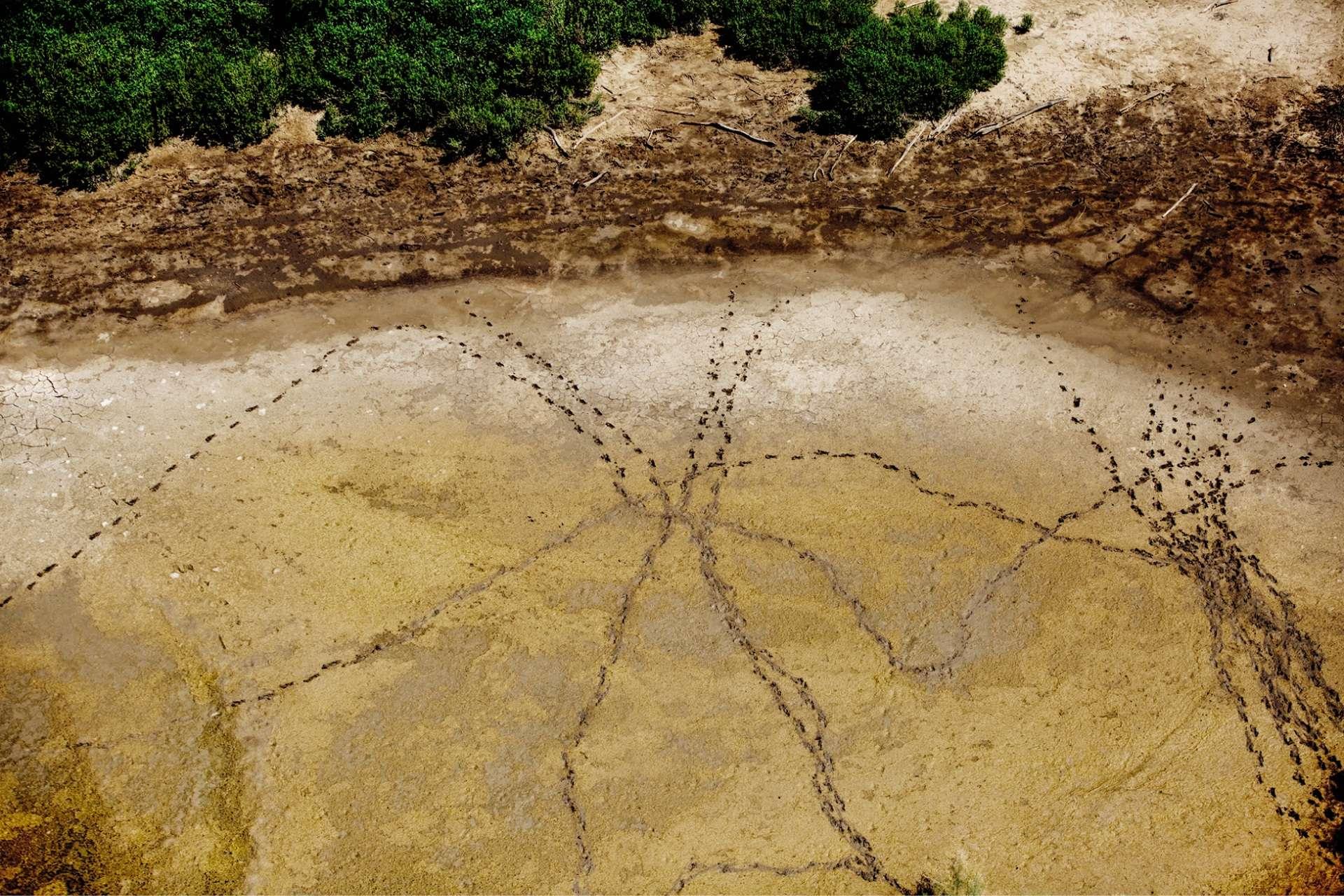 Les traces de pas de migrants ayant récemment marché sur un bassin asséché, à Mission (Texas).