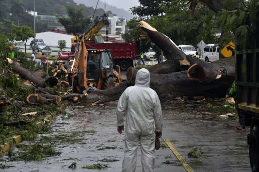 Les travailleurs ont coupé un arbre qui a tué un garçon dans sa chute lors du passage d'Otto au Panama, le 22 novembre.