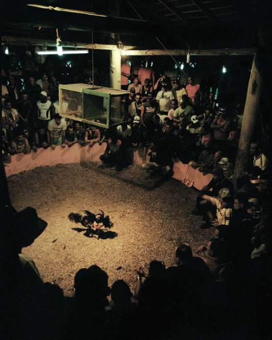 Combat de coqs dominical à Valla de gallos, unique arène tolérée par lesautorités cubaines.
