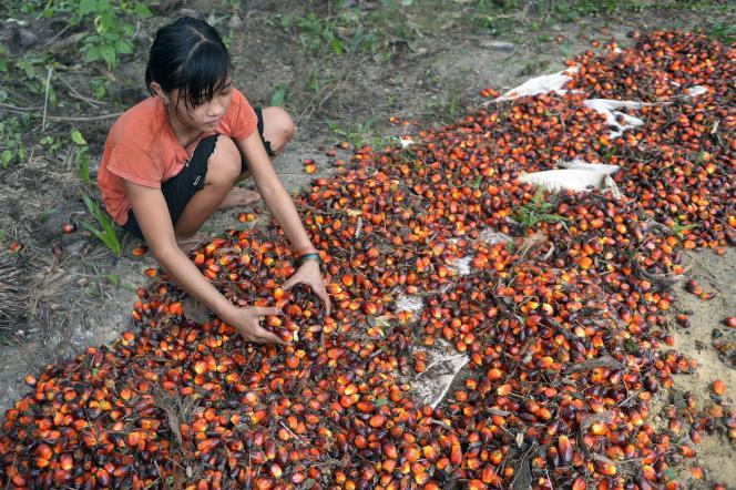Le 16 septembre 2015, une adolescente indonésienne de 13ans dans une plantation d'huile de palme, à Pelalawan, dans la région de Riau sur l'île deSumatra.
