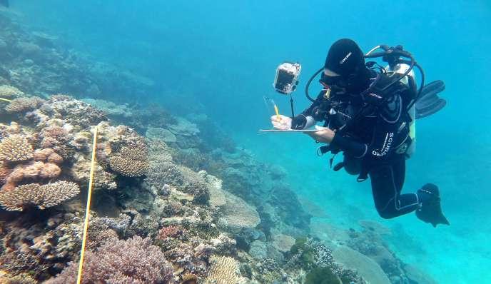 En mars et avril, la Grande Barrière de corail a été victime du pire épisode de blanchissement de coraux jamais enregistré.