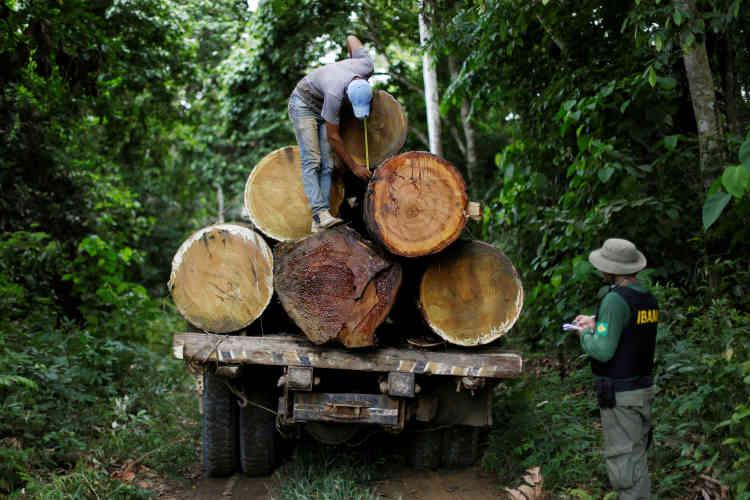 L'Ibama est responsable de la protection de 65%de la plus grande forêt tropicale du monde. La déforestation, après avoir culminé en 2004 (27700 kilomètres carrés détruits), s'est fortement ralentie les années suivantes, avant de repartir à la hausse en 2013.