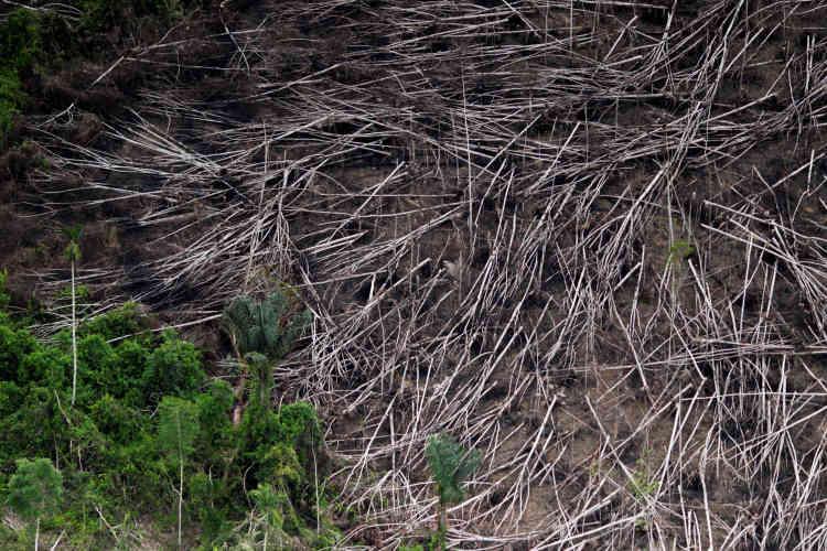L'année dernière, la forêt brésilienne a perdu l'équivalent de six fois la superficie de LosAngeles.