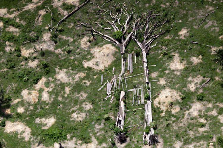 Couvrant plus de 5millions de kilomètres carrés, la forêt amazonienne absorbe entre 1et2milliards de tonnes de dioxyde de carbone par an, ce qui rend sa préservation vitale pour la lutte contre le réchauffement climatique.