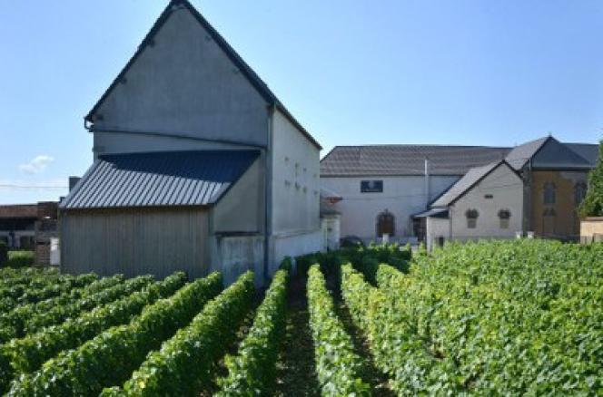 Le Clos Faubourg-Notre-Dame, à Vertus (Marne), un vignoble de vieilles vignes, monopole de la famille Fourny depuis 1930.