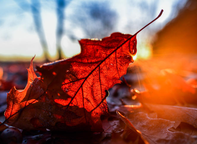 Sun shines through autumn leaves in Groetsch near Cottbus, eastern Germany, on November 29, 2016. / AFP PHOTO / dpa / Patrick Pleul / Germany OUT