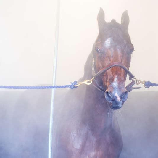 Un cheval après sa course.
