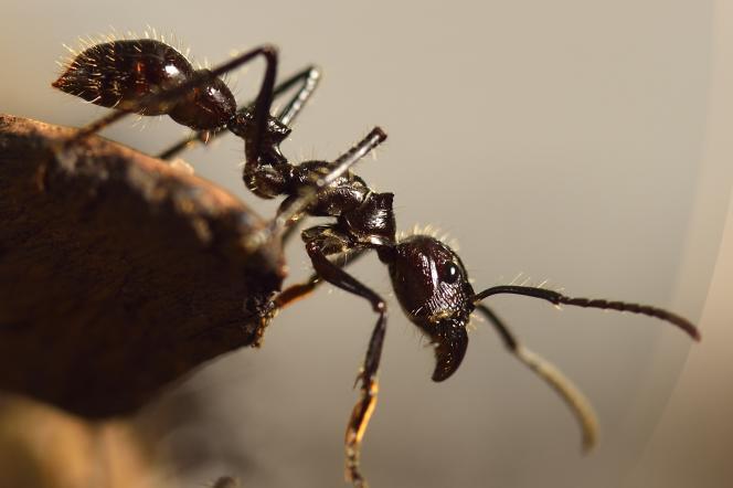 Une fourmi.