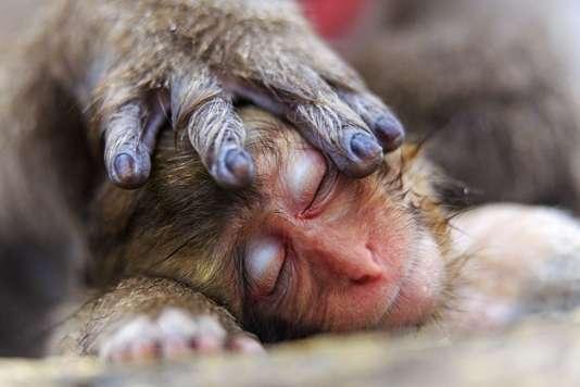 Le cliché « La main d'une mère»,d'Alain Mafart Renodier, a étésélectionné par le Musée d'histoire naturelle de Londres pour son concours annuel de photographie de nature.