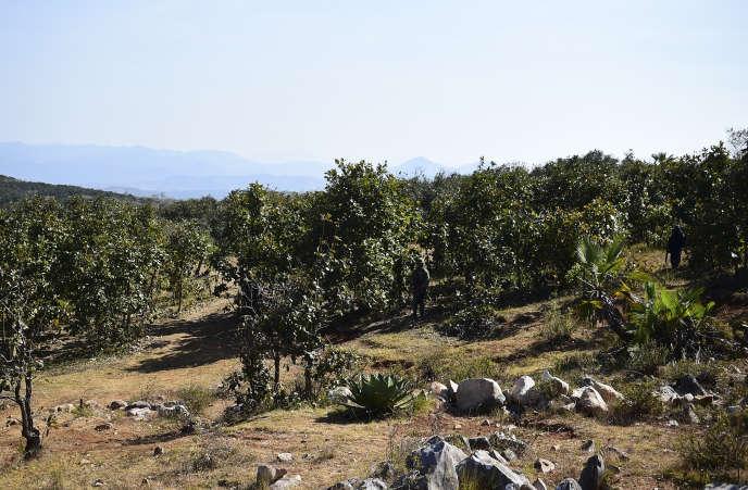 Le lieu où a été découvert un charnier, dans l'Etat du Guerrero, en novembre.