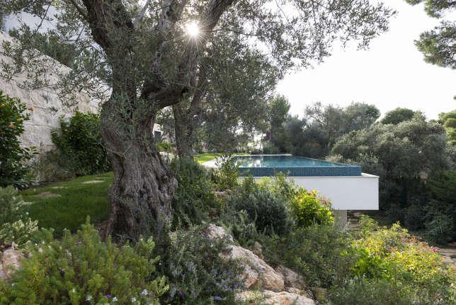 A Saint-Jean-Cap-Ferrat, une piscine suspendue, cachée par un grand olivier.