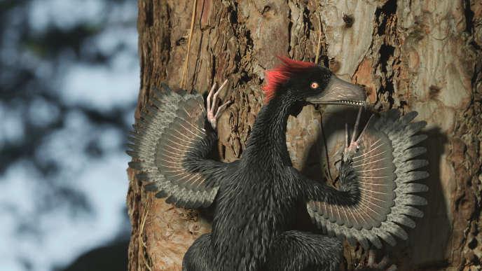 Anchiornis est un genre éteint de dinosaures à plumes de la famille des troodontidés dont le nom signifie « presque oiseau ». Il a été découvert en Chine.