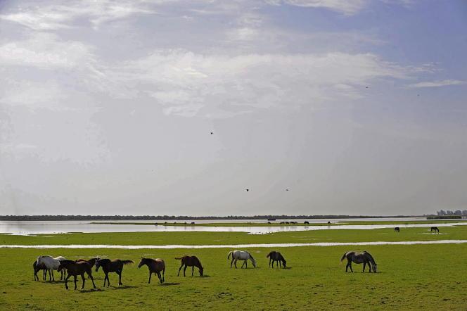 Au parc naturel de Doñana, au sud de l'Espagne.