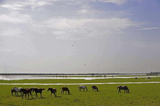 Des réservoirs de gaz au cœur du parc naturel espagnol de Doñana