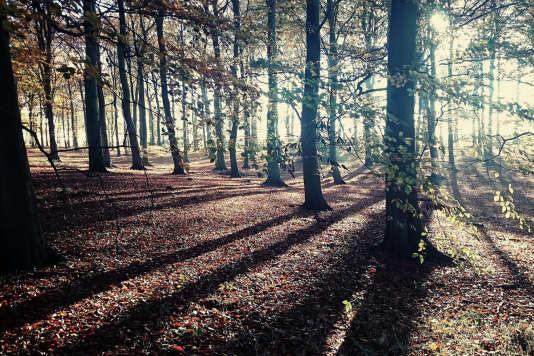 Dans la forêt de Sherwood, au Royaume-Uni.