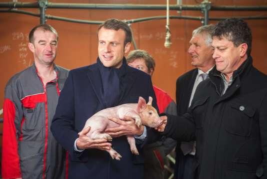 Emmanuel Macron dans un élevage porcinà Moustoir-Remungol (Morbihan),le 17 janvier.