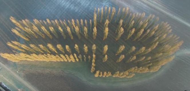 La« cathédrale verte» de Marinus Boezem filmée par un drone parDronesky.nl