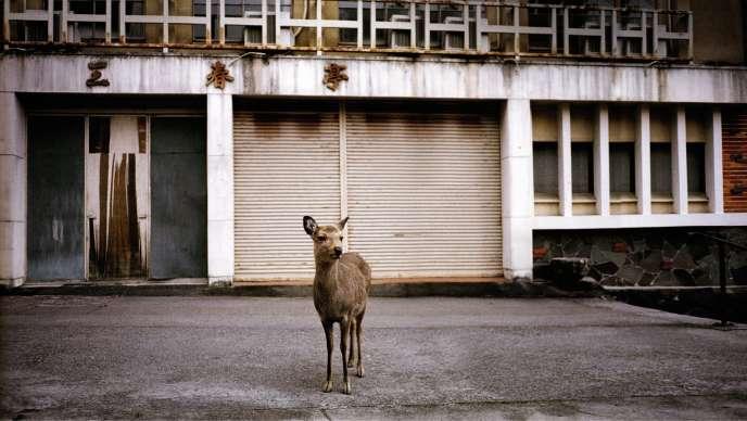 Les cerfs s'aventurent parfois hors du parc du sanctuaire Kasuga-taisha comme ici, devant un bâtiment désaffecté de Nara, non loin du mont Wakakusa.