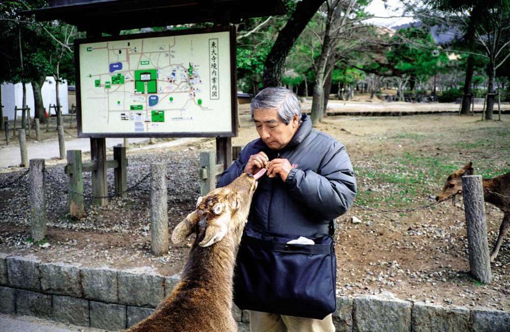 «C'est le seul daim qui comprenne des mots. Quand je l'appelle, il semble surgir de nulle part», a expliquéà Miki Kitamuracet homme, qui vient presque tous les jours à la rencontre de l'animal.
