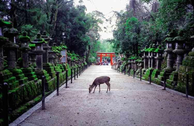Sur la route du parc qui mène au sanctuaire Kasuga-taisha.