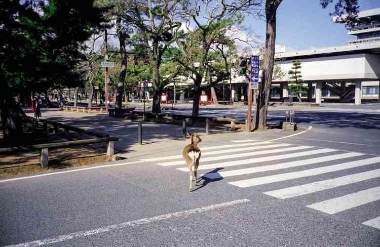 Devant la préfecture de police de Nara.