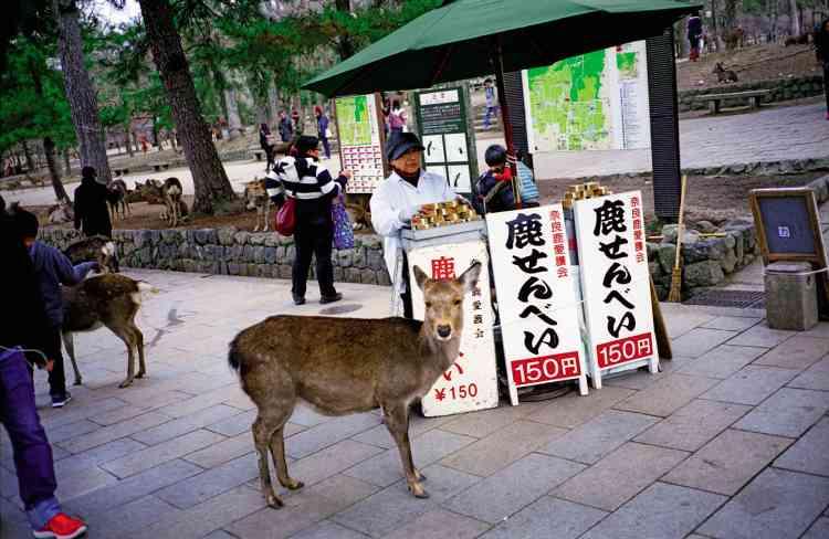 Un kiosque où sont vendus les shika senbei, biscuits au riz, seule nourriture que les touristes sont autorisés à leur donner.