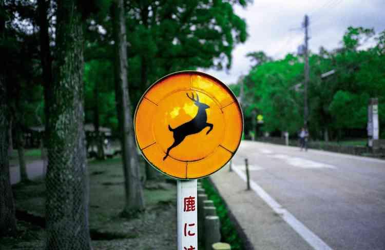 Panneau signalisant la présence des cerfs dans le parc.