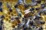 Les «néonics» ont précisément été conçus pour interagir avec certains récepteurs cérébraux que les insectes ont en commun avec les mammifères.