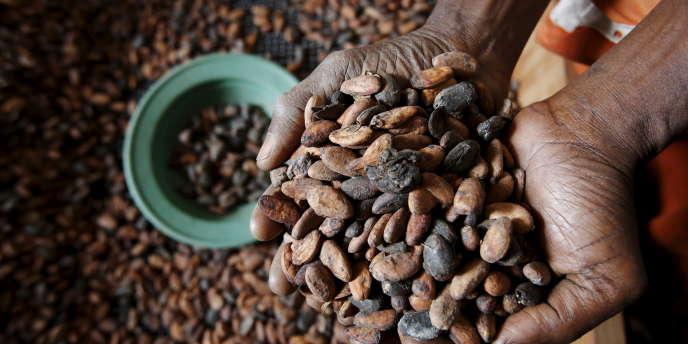 Fèves de cacao, à San-Pédro, en Côte d'ivoire, en janvier 2016.