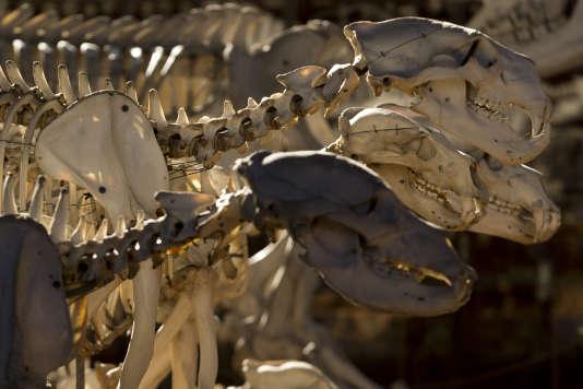 Les collections du Muséum comprennent 67millions de biens (animaux naturalisés, minéraux, fossiles, végétaux).