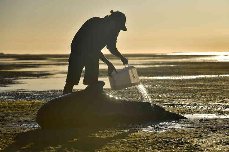 «Nous pouvons peut-être sauver certaines des baleines échouées», a expliqué Herb Christophers, porte-parole du département de la protection de l'environnement (Department of Conservation, DOC).