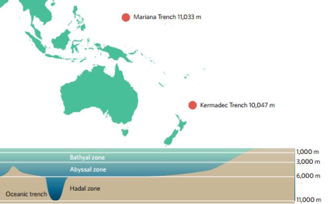 Les fosses des Mariannes et des Kermadec plongent à plus de 10 000 mètres de profondeur.