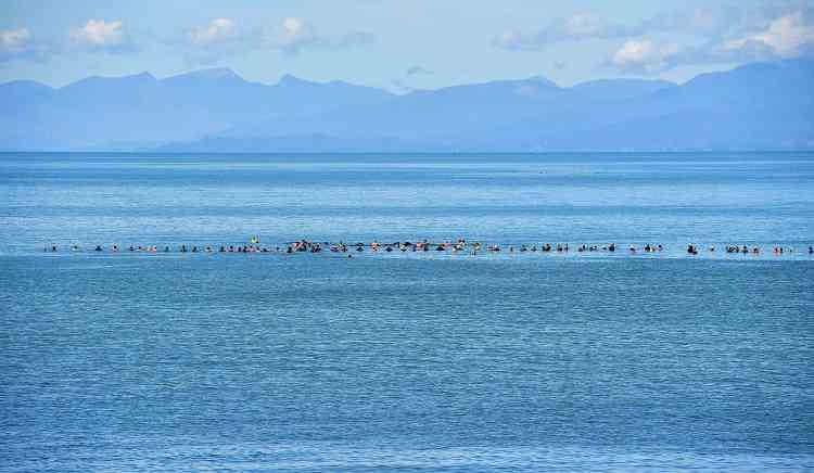 Samedi, 150 volontaires avaient même défié une alerte aux requins pour former un véritable mur humain dans la mer, afin d'essayer d'empêcher le retour des survivantes remises à flot, ainsi que l'arrivée de ces 200 nouvelles baleines.