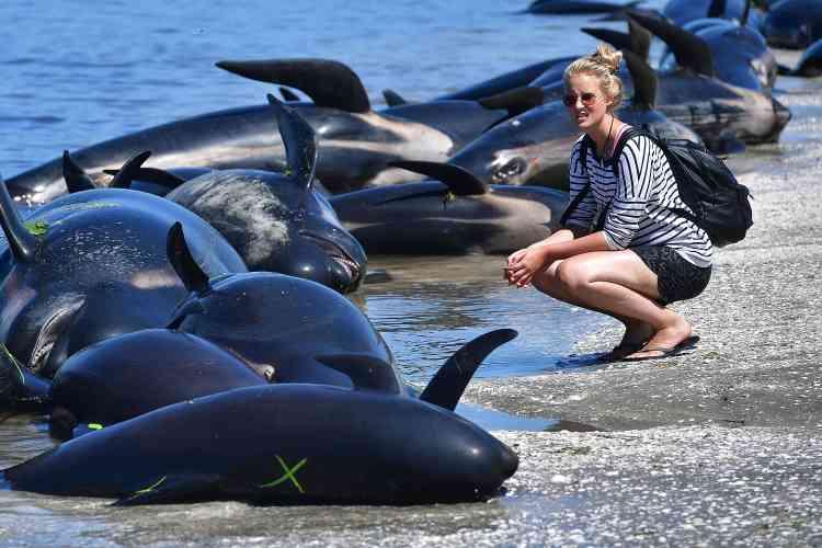 Les raisons de ces échouements restent mystérieuses. Les baleines « ont peut-être répondu à des signaux émis par les baleines déjà entrées. C'est très inhabituel, nous n'avons rien vu de tel auparavant », a avancé Daren Grover, directeur général de l'organisation environnementale Project Jonah, qui participe aux opérations de sauvetage.