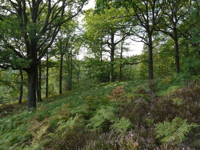 Rambouillet est une des forêts françaises dites de protection.