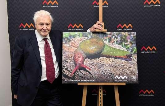 DavidAttenboroughet la limace-escargot Attenborougharionrubicundus, le 8 février, à l'Australian Museumde Sidney.