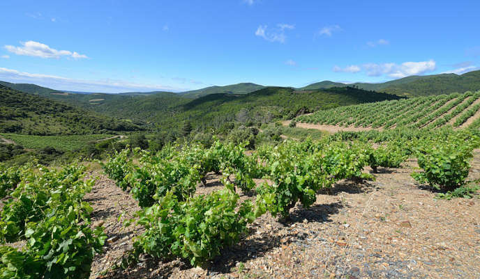 Dans l'Hérault,les espaces agricoles perdent du terrain face à l'urbanisation galopante.
