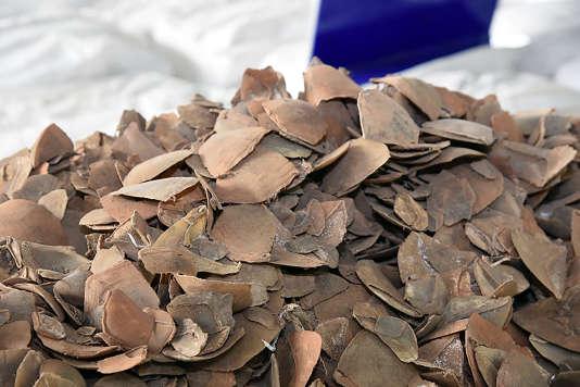 Des écailles de pangolin saisies en Thaïlande, début février.