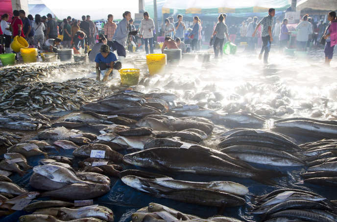 Des travailleurs birmans trient du poisson à Ranong, dans le sud de la Thaïlande.
