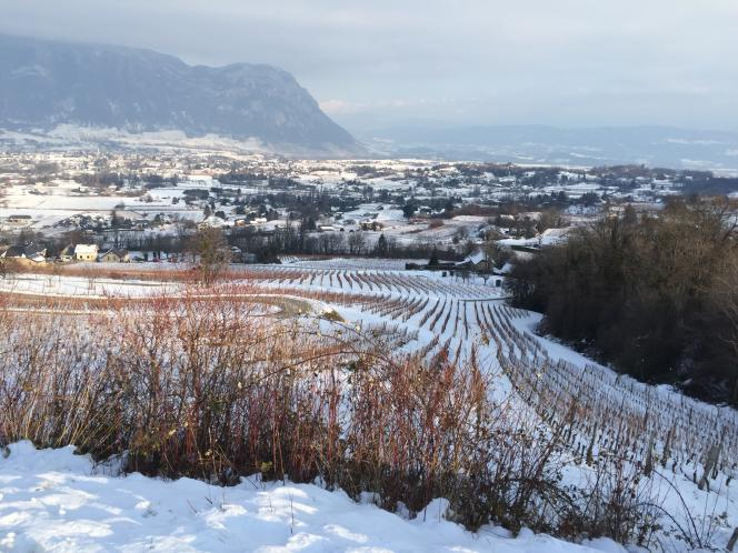 Les vignes du domaine familial Masson, au lieu-dit Le Villard qui domine Apremont.