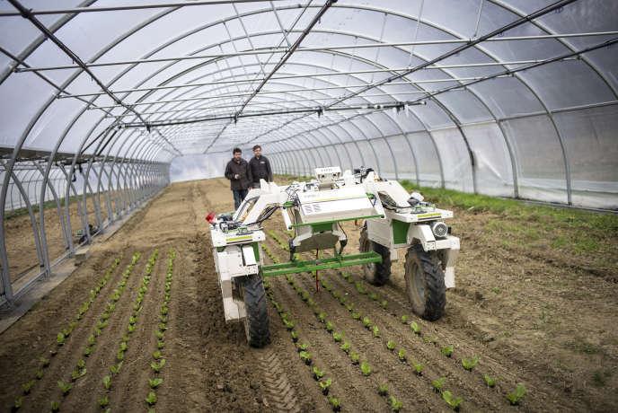 L'entreprise NaÏo à Toulouse fabrique des robots agricoles, en février 2017. Dans une serre de la région toulousaine, des techniciens réalisent des tests avec les robots agricoles, ici avec le robot