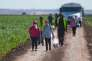 Travailleurs saisoniers agricoles mexicains à Yuma (Arizona) le 15 février.
