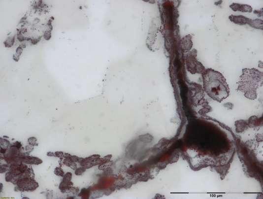 Filaments d'hématites attachés à un fragment de fer, interprétés comme les restes de microbes fossilisés similaires à ceux que l'on trouve aujourd'hui près des cheminées hydrothermales sous-marines.