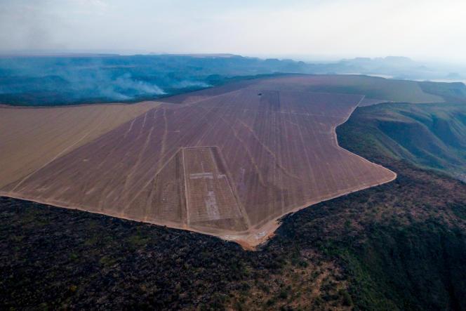 La forêt brésilienne mise à nu pour les cultures du soja.