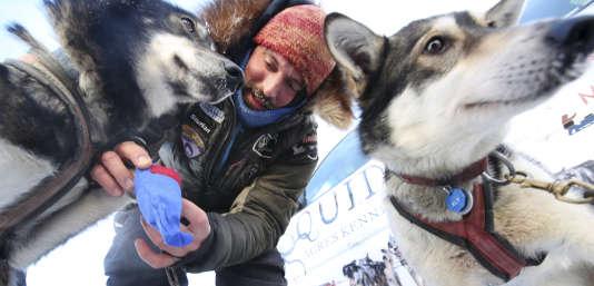 Cody Strathe donne à manger à ses chiens, à un point de passage de l'Iditarod 2017.