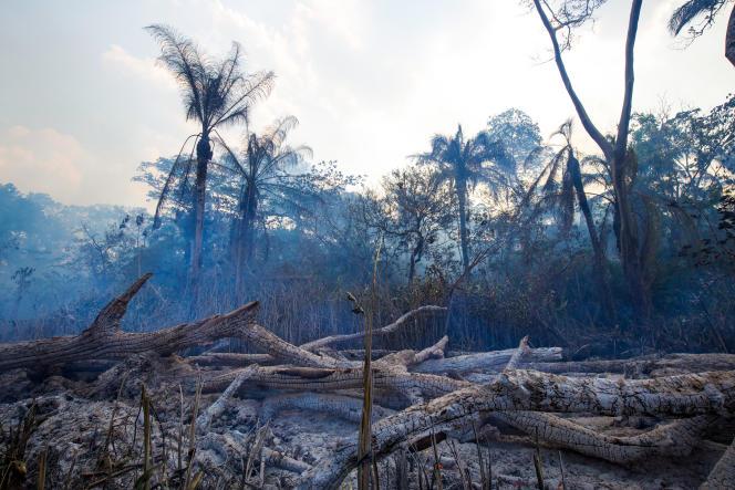 En Bolivie, une forêt carbonisée avant d'être rasée au bulldozer pour l'agriculture industrielle.