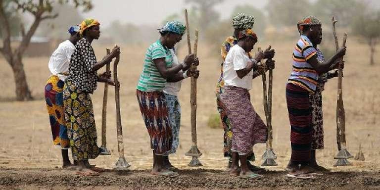 Des femmes travaillent dans les champs, à Diapaga, au Burkina Faso, en mars 2012.
