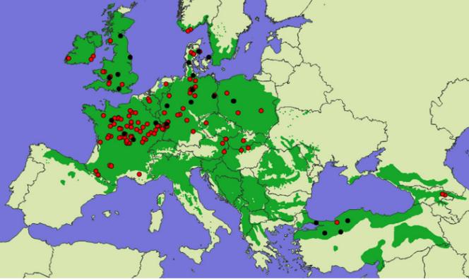 Des chênes sessiles venus de toute l'Europe: des populations issues de 116 origines géographiques (en rouge) ont été transférées sur 23 sites d'étude (en noir). Leur aire de répartition naturelle couvre les territoires en vert sombre.