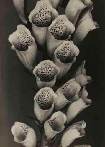 «Photographe allemand de la Nouvelle Objectivité, son œuvre privilégie à l'origine la photographie de plantes pour les éditeurs Folkwang/Auriga. Après la seconde guerre mondiale, il se découvre un nouvel intérêt pour la nature et les paysages, et en particulier pour les arbres et les rochers. »